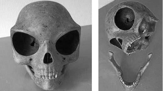 Craniul Sealand (craniul de pe insula Sealand)